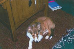 dog1 (1)